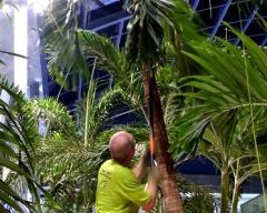 Palmenpflege